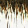 000020 Reeds