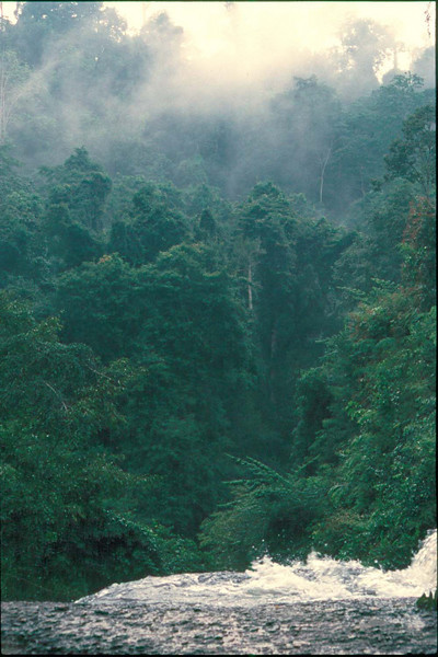 thai830