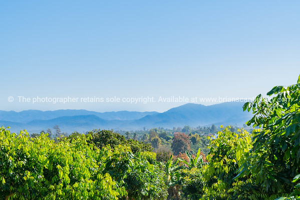 Tiered mountain ranges in distance beyond orchards of northern Thailand.