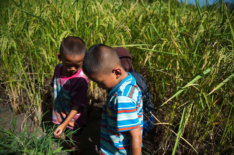 These kids in the rice fields were capturing small fish and putting them in a bottle.