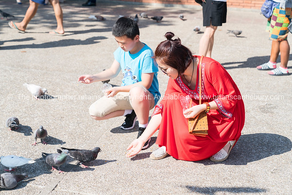 Woman in bright red dress crouches feeding pigeons in Pratu Tha phae Park outside the old city wall east gate.