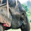 000031_Elephant