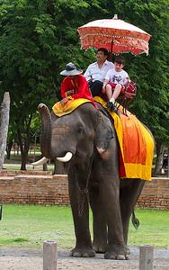 Elephants near Wat Phra Sanphet ruins