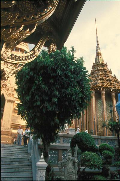 thai430