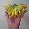 These small bananas are delicous sweet treats.