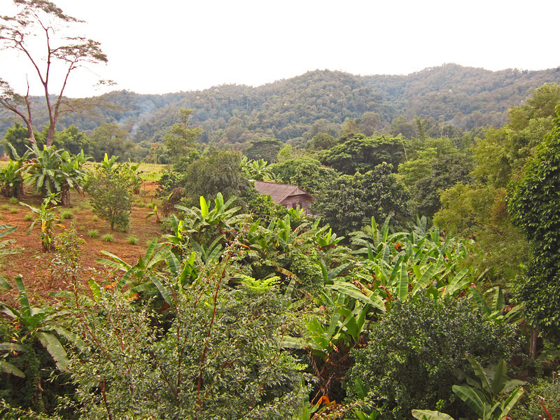 Hill country north of Chang Mai