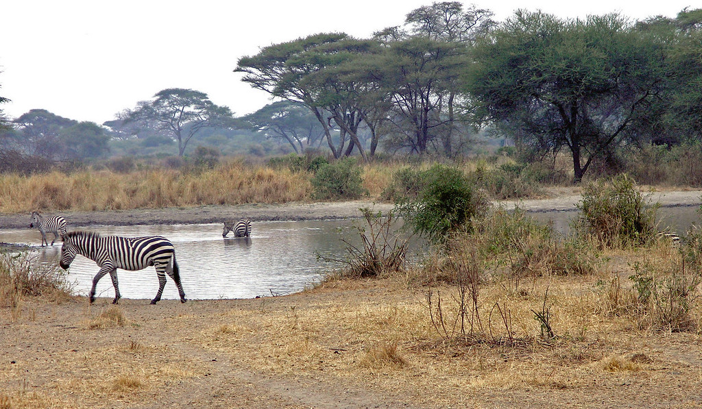Jul 2.  Zebra at a water hole.