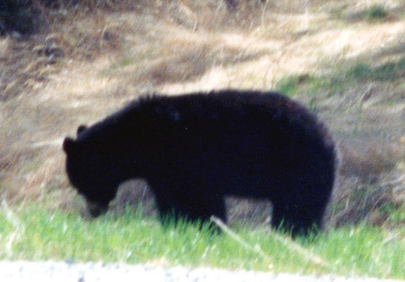 May 26.  Bears along the way too.