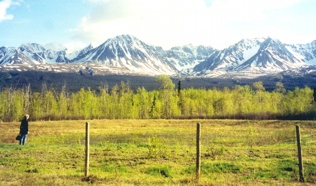 May 31.  We stayed in Haines Junction, Yukon, and took a walk behind the motel to a small pond.