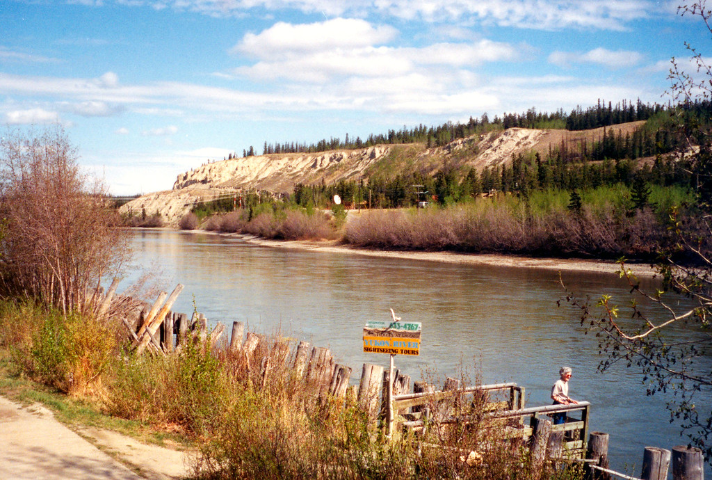 May 27.  At Whitehorse, Yukon, we walked down to the pier to see the Yukon River.  Weathered log pilings line the river.