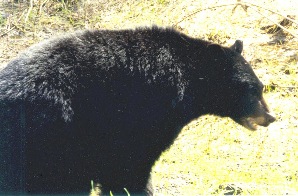 June 2.  We saw bears.
