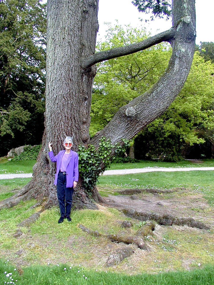"May 16.  On the grounds of Blarney Castle is Rock Close, a garden with unusual rock formations, and this tree with a limb growing through another limb.  A ""close"" is a parcel of land."