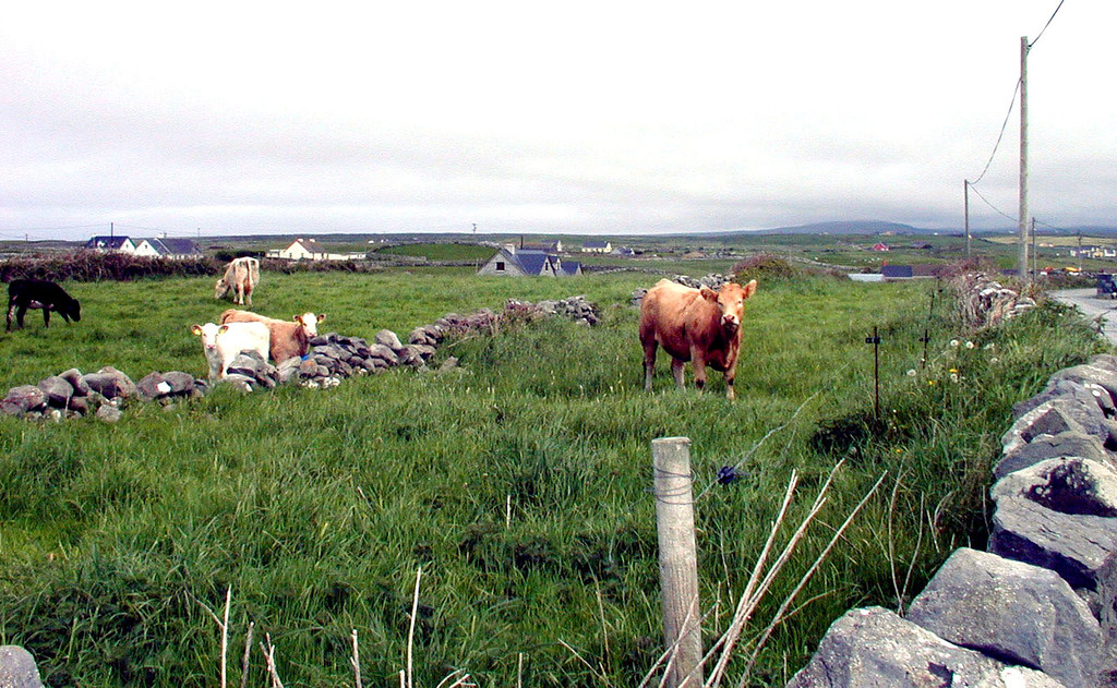 May 14.  Doolin has only one street, with a few short alleys here and there.  We walked up one narrow side road to this field less than 75 yards from the main street.