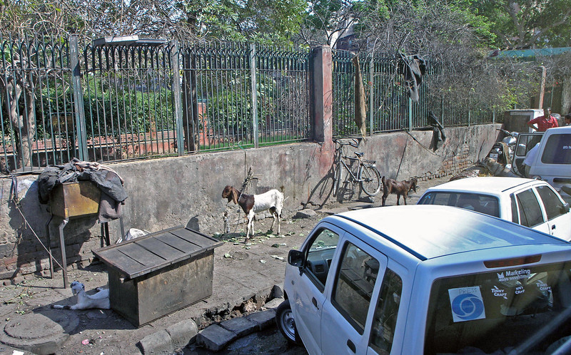 Feb 26.  From the bus I took this picture.  I'm not sure why the goats are tied here, but animals are frequently seen.
