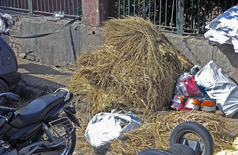 Feb 26.  Hay for the goats, and maybe for the few cows left in Delhi.  A few years ago Delhi decided the many cows wandering the streets interfered with business, so most cows were removed; however in smaller cities and villages cows still wander about.