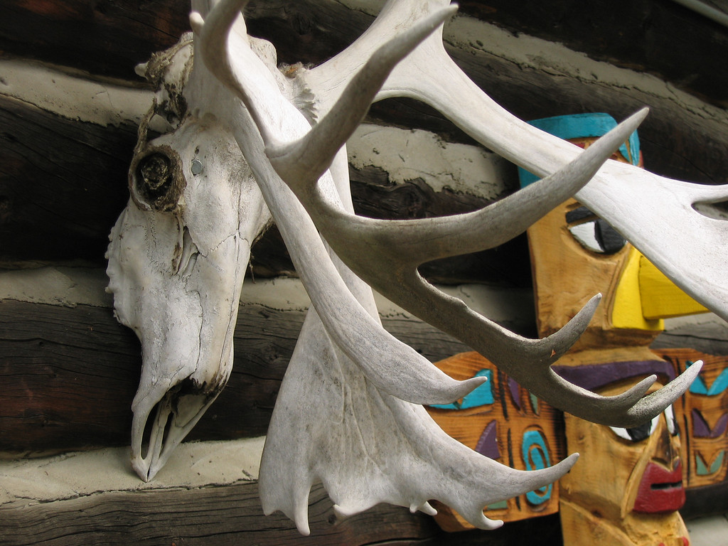 Moose anter and skull in Fairbanks, Alaska