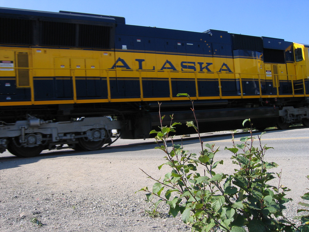 Alaska train in Denali National Park