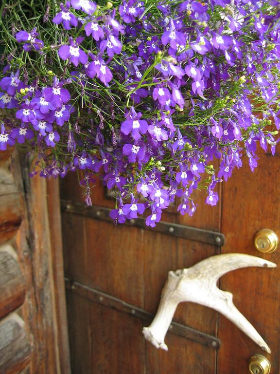 Antler handle and flowers in Talkeetna, Alaska