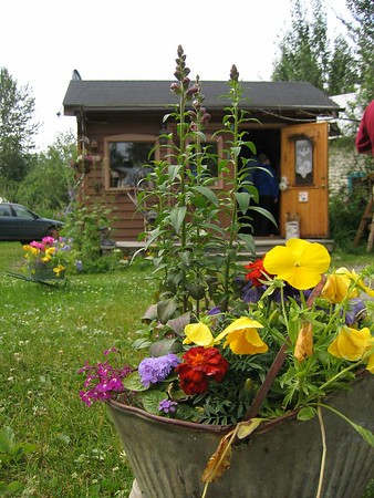 Metal bucket and flowers in Talkeetna, Alaska