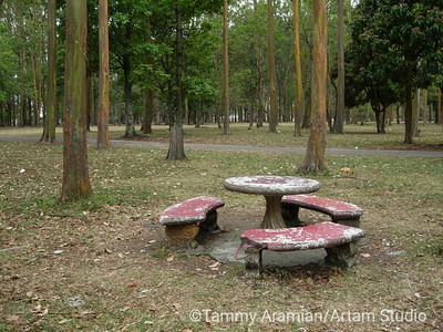 A bucolic picnic table on the north side of Parque Sabana