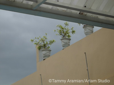 potted plants above poolside