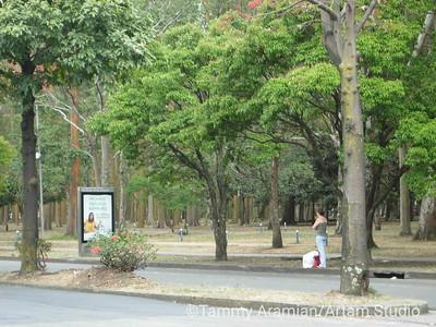 bus stop on Avenida Las Americas