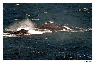 Whales in Motion