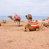 Our camels and their colorful blankets...