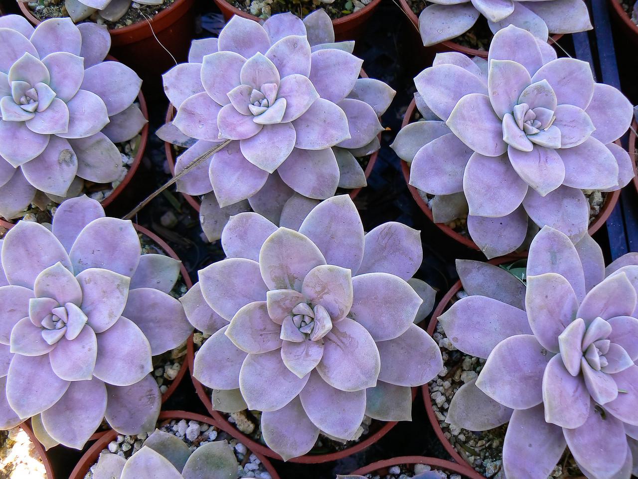 California: Cactus