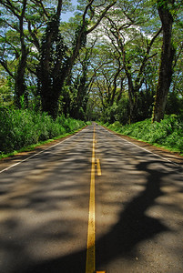My favorite road in HI on the way to Puna, HI