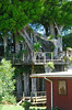 Great tree house in Hawi