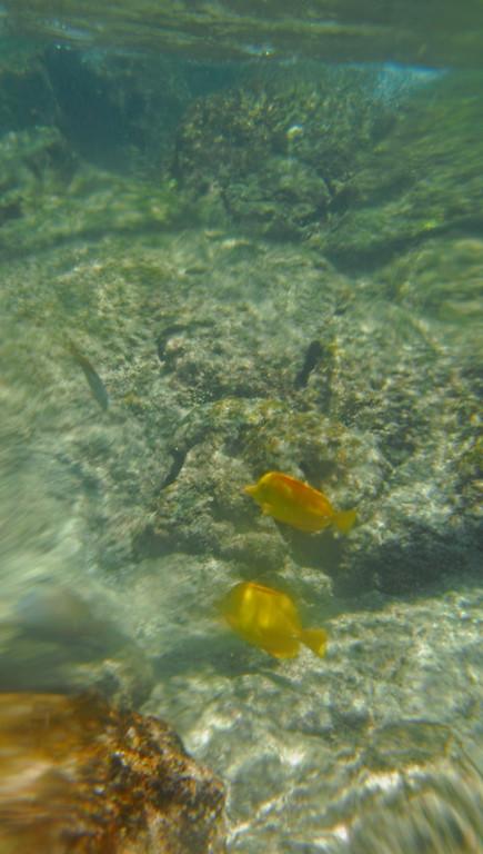 LIttle yellow fish!