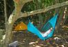 Chillin at camp at Waimanu Valley hike