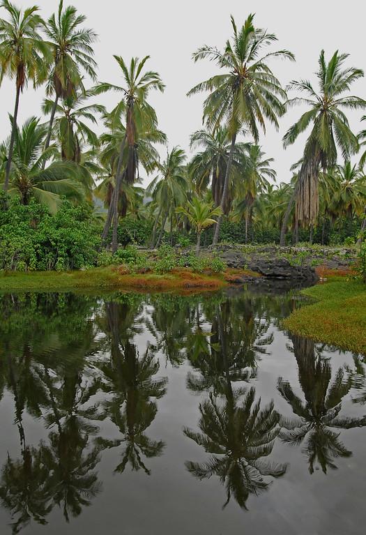Palm trees and pond at Hiki-au Heiau park.