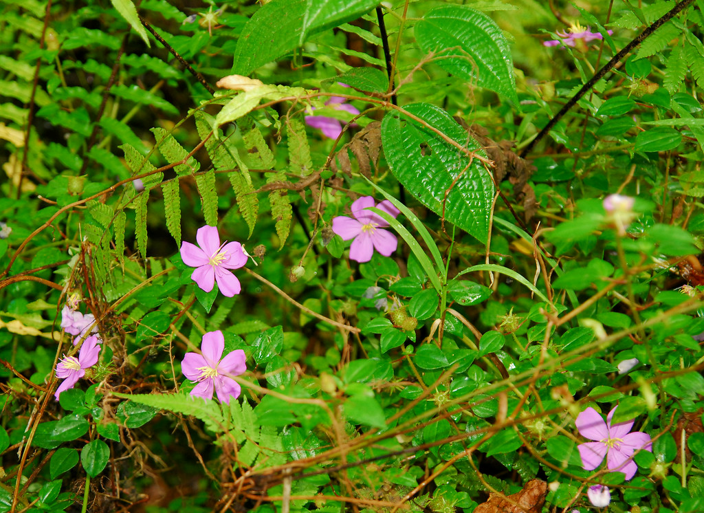Jungle flowers in Pahoa area