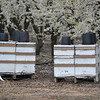 About every 1/8 of a mile there are these bee boxes, necessary, of course, for there to be fruit later.