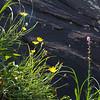 wildflowers against cliff, Chimney Rock