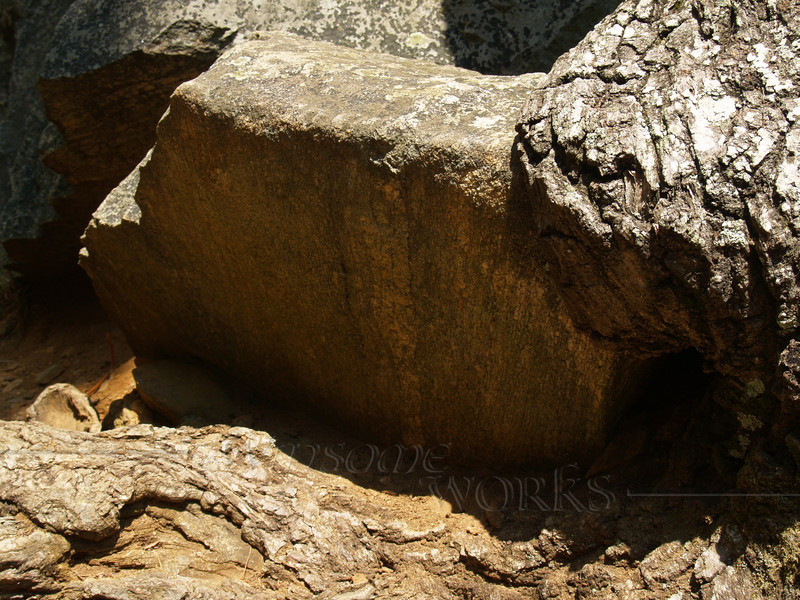 Rock gripped by tree roots, Chimney Rock S.P.