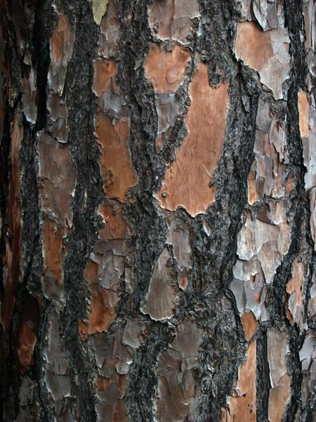 Slash pine bark (Pinus elliottii)