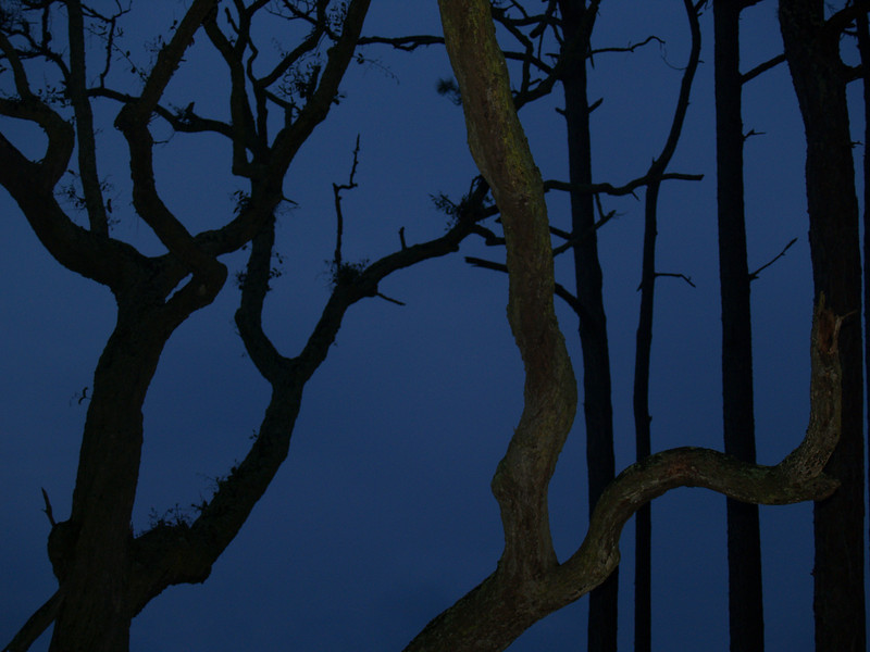 Weird tree forms at night
