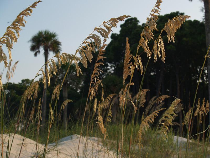 Palmetto and sea oats