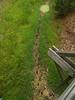 Alligator tracks to a mudhole