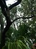 Rainy woods scene