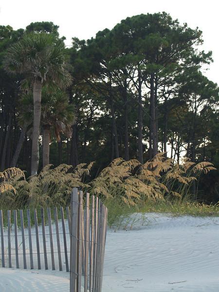 Palmettos and sea oats