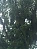 Spanish moss on huge tree, Beaufort