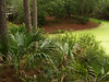 Pond in front of visitors' center, Hunting Island S.P.