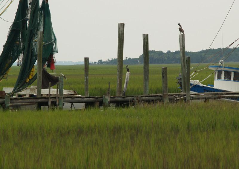 Shrimp boats & pelicans, South Carolina