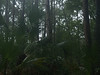 Forest near lighthouse, Hunting Island