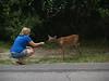 Trudy feeding deer, Hunting Island S.P.