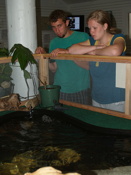 Watching turtle in Visitors' Center